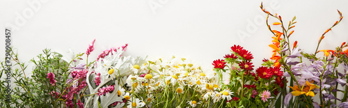 panoramic shot of bunches of diverse wildflowers on white background with copy space - 290908457