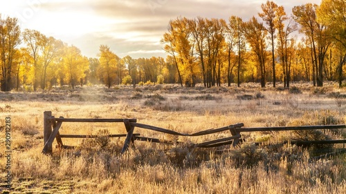 An autumn landscape scene in Jackson Hole, Wyoming, including an old style buck and rail wooden ranch fence and backlit cottonwood trees Fotobehang