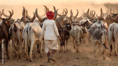Rabari herder in a rural village in the district of Kutch, Gujarat Poster Mural XXL
