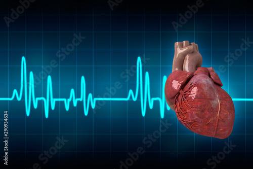 Valokuva  3d illustration  Anatomy of Human Heart