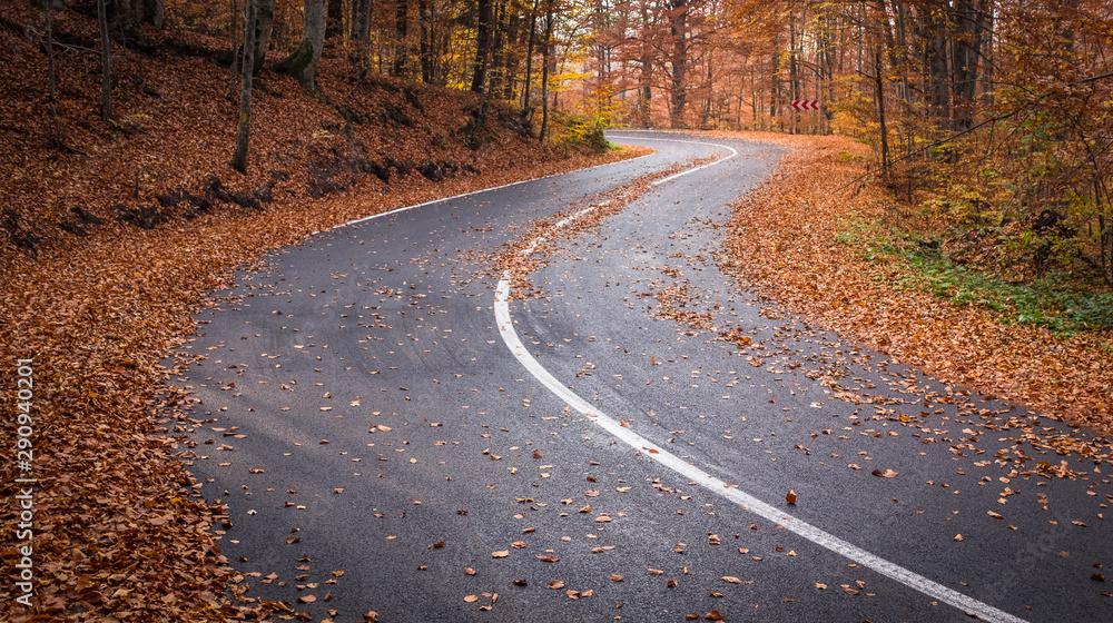 Fototapeta Curvy asphalt road in the autumn forest