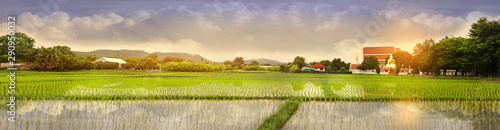 Foto auf Gartenposter Reisfelder Green Terraced Rice Field in Hang Dong, Chiang Mai, Thailand, Panoramic photo