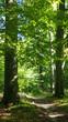 Waldweg, Deutschland