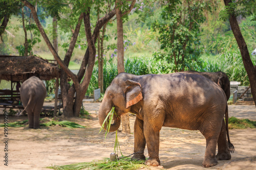 Photo elephant in the zoo