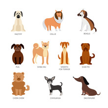 Set Of Breeds Of Pets, Animals And Dogs.