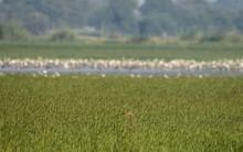 Grey Heron Bird Hiding Under Green Grass