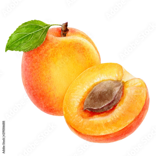 Fotografie, Tablou Apricot fruit watercolor isolated on white background