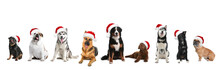 Set Of Adorable Dogs In Santa Hats On White Background