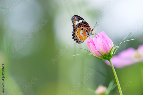 Monarch butterfly seeking nectar on a flower - 291014419