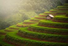 Small Hut Over Terrace Rice Field, Mu Cang Chai , Vietnam