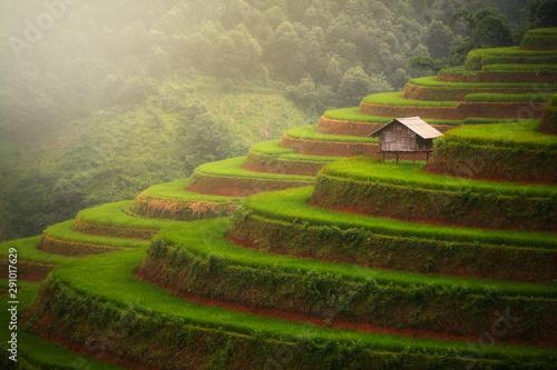 Foto auf Gartenposter Reisfelder Small hut over terrace rice field, Mu cang chai , Vietnam