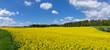 canvas print picture - Von Wiesen und Wald umgebenes, großes, gelb blühendes Rapsfeld - Panorama
