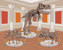 Group Of Dinosaur Skeletons At...