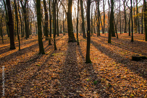 fototapeta na drzwi i meble Autumn park, forest with sun rays beautiful landscape photo. Alm