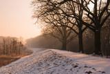 winter bare tree path landscape photo.