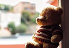 Portrait Of A Beautiful Teddy ...
