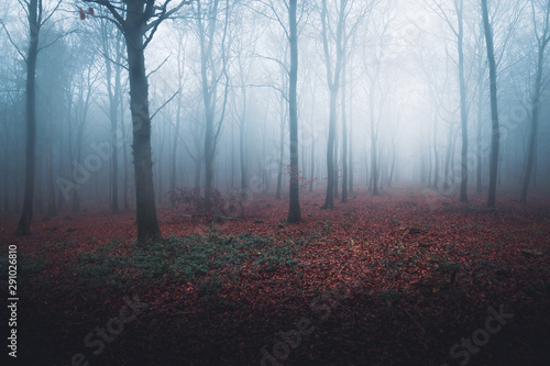 Blue mist in a dark forest with orange leaves on the ground