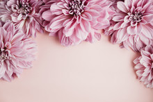 Flatlay Of Dahlia Heads On A Pink Background