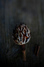 Isolated Vertical Of A Magnolia Seed Pod