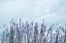 Tall Grass Against Blue Sky