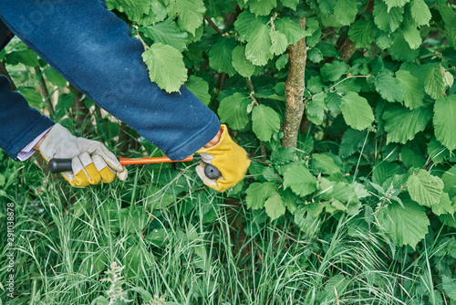 prunes branches in the garden with long pruning shears and protects hands with yellow gloves