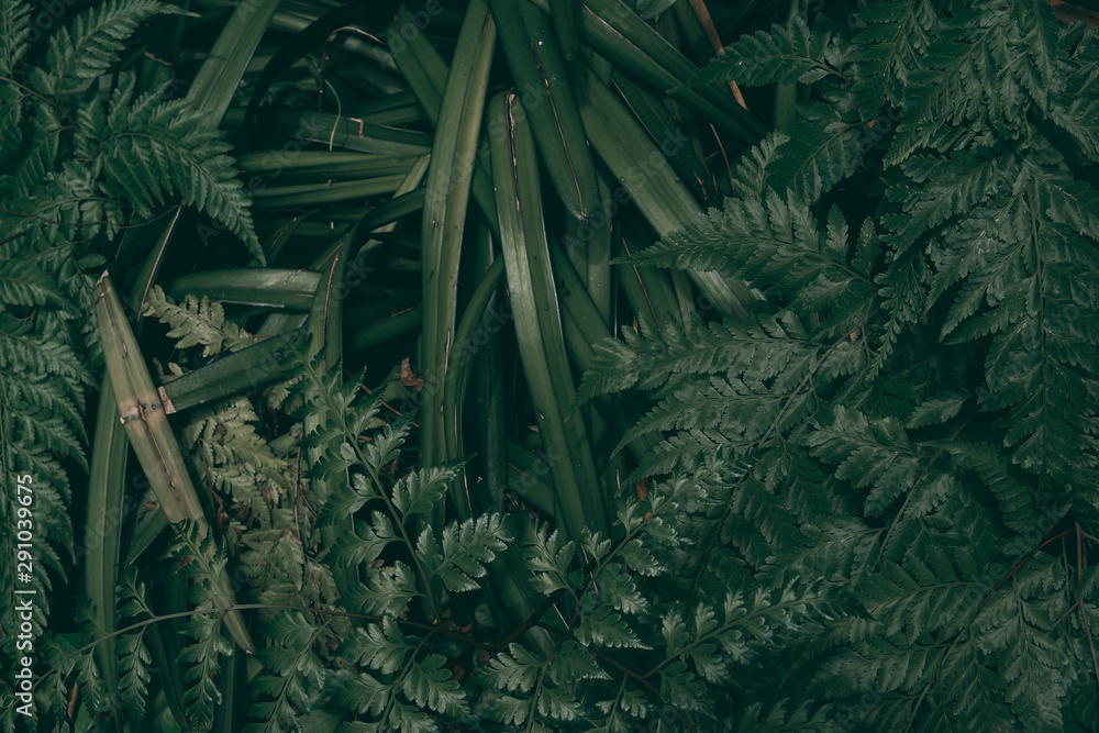 Fototapety, obrazy: Tropical green leaf background, Dark tone theme.