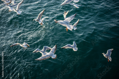 flock of seagulls flying over the sea Wallpaper Mural