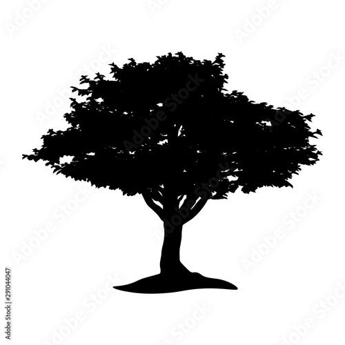 Fotografia  Tree logo