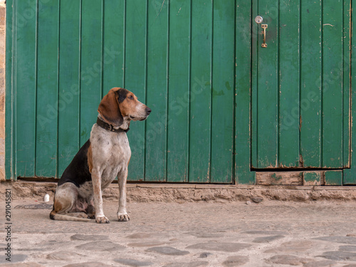Foto  A mongrel dog sitting in front of a green door on one street at the colonial town of Villa de Leyva, in the central Andean mountains of Colombia