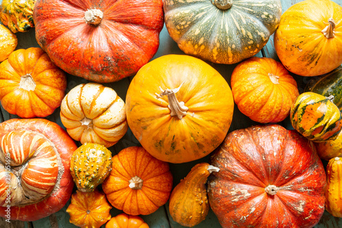 assorted pumpkins and gourds Wallpaper Mural