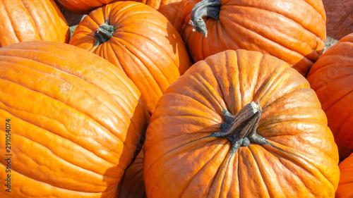 Photo  Draufischt von mehreren großen orangenen Kürbissen