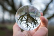 Close Up Of A Hand Holding A Crystal Ball Reflecting An Old Hollow Tree Against A Bokeh Background