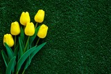 Fototapeta Tulipany - Yellow tulip on green grass background for decoration and love concept