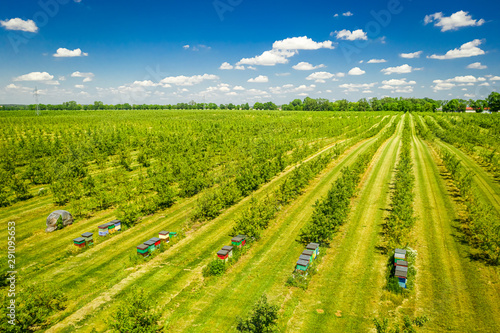 Beehives among the orchard with fruit trees, aerial view