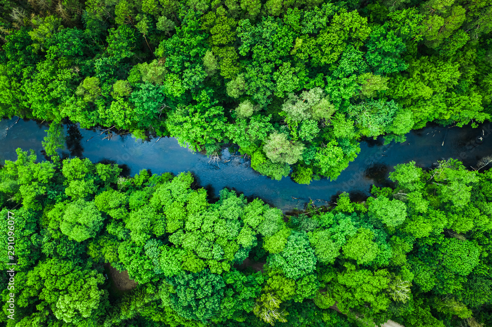 Green forest and river in Tuchola national park, aerial view