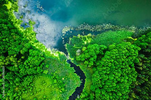 Strange blooming algae on the lake in summer, flying above - 291096630