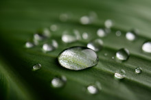 Many Drops Of Water Drop On Ba...
