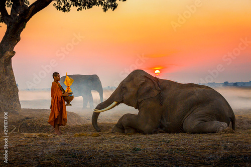 Pinturas sobre lienzo  Elephant made merit a monk's bowl