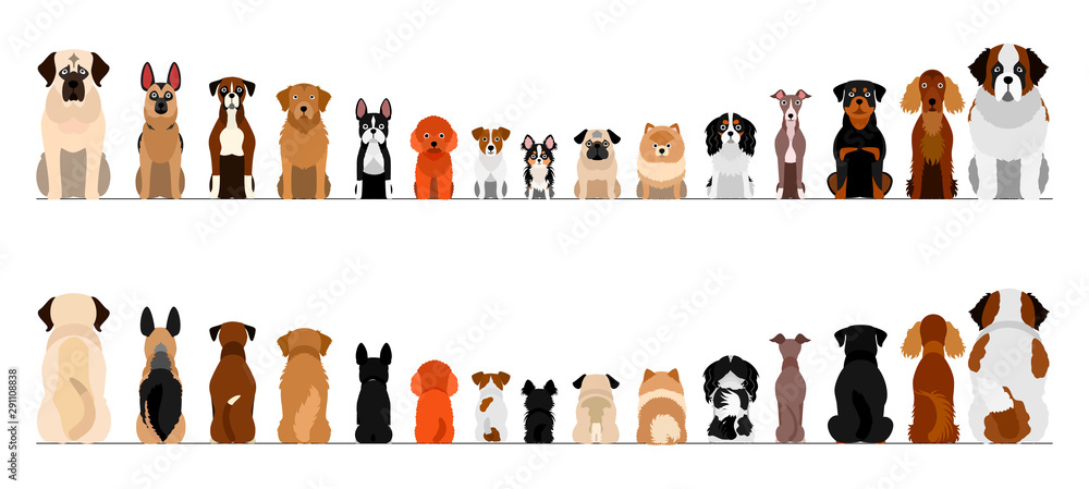 Fototapety, obrazy: small and large dogs border border set, full length, front and back