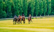 Horse Race Riding Sport Jockey...