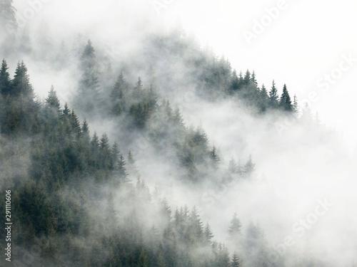 las-pokryty-mgla-w-deszczowy-letni-dzien