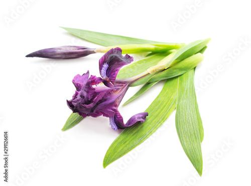 Foto auf AluDibond Iris Purple beautiful irises.