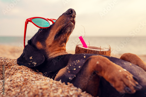 cute dog of dachshund, black and tan, buried in the sand at the beach sea on sum Wallpaper Mural
