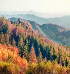 Panel Szklany Góry Colorful autumn scene of Carpathians. Impressive morning view of Sokilsky ridge, Ukraine, Europe. Beauty of nature concept background. Instagram filter toned. Orton Effect.