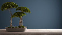 Vintage Wooden Table Shelf With Potted Green Bonsai, Ceramic Vase, Blue Navy Colored Background, Mock-up With Copy Space, Zen Concept Interior Design