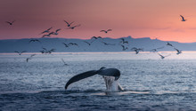 Humpback Whales In The Beautif...