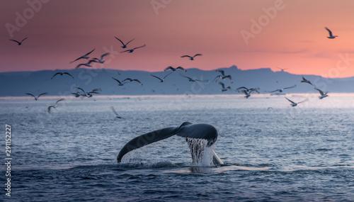 Obraz na plátně Humpback whales in the beautiful sunset landscape