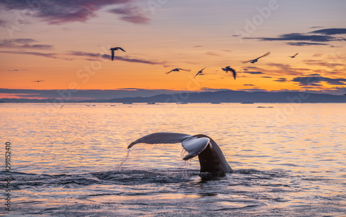Fotobehang Vogel Humpback whales in the beautiful sunset landscape