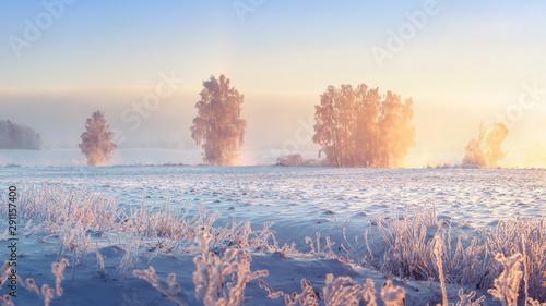 Wall Murals Beige Winter landscape. Frosty winter nature in morning sunrise. Beautiful winter scene. Winter landscape