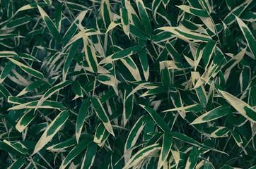 Fototapetaclose up of bamboo leaves , taken in Tokyo , Japan